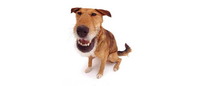 Электрошоковый ошейник в дрессировке собак