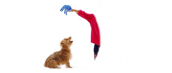 Как научить щенка подавать голос по команде.