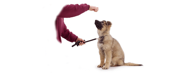 """Как научить щенка команде """"Сидеть!"""""""