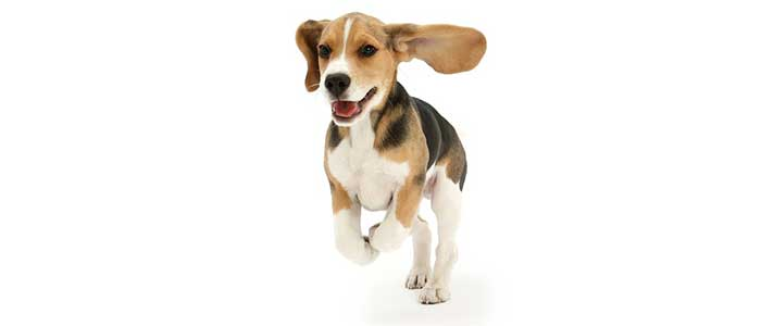 как научить щенка подхъодить по команде Ко мне!