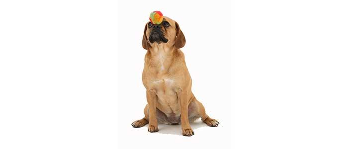 Как правильно дрессировать щенка?