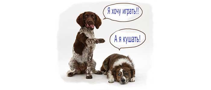 Как дрессировать своего щенка или собаку?