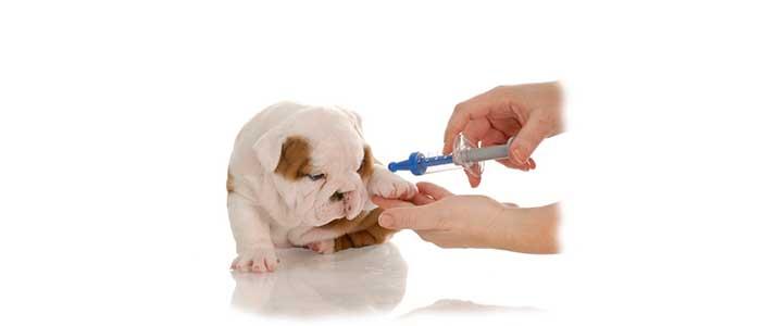 Когда делать первую прививку щенку?