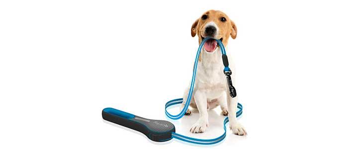 Приучение щенка к ошейнику и поводку