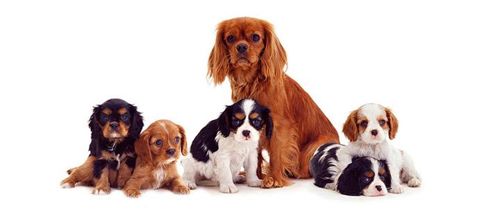 Выбор щенка